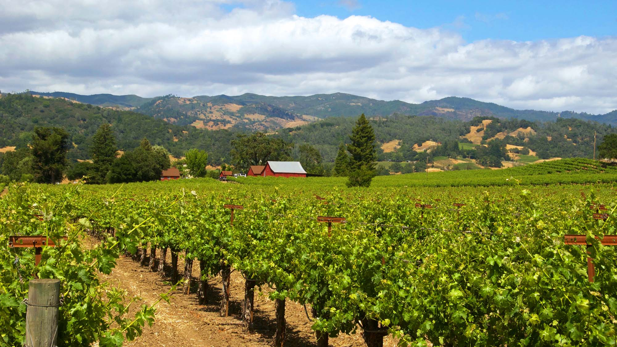 Wine Country Counties Sue Governor Newsom Over Outdoor Dining Closure